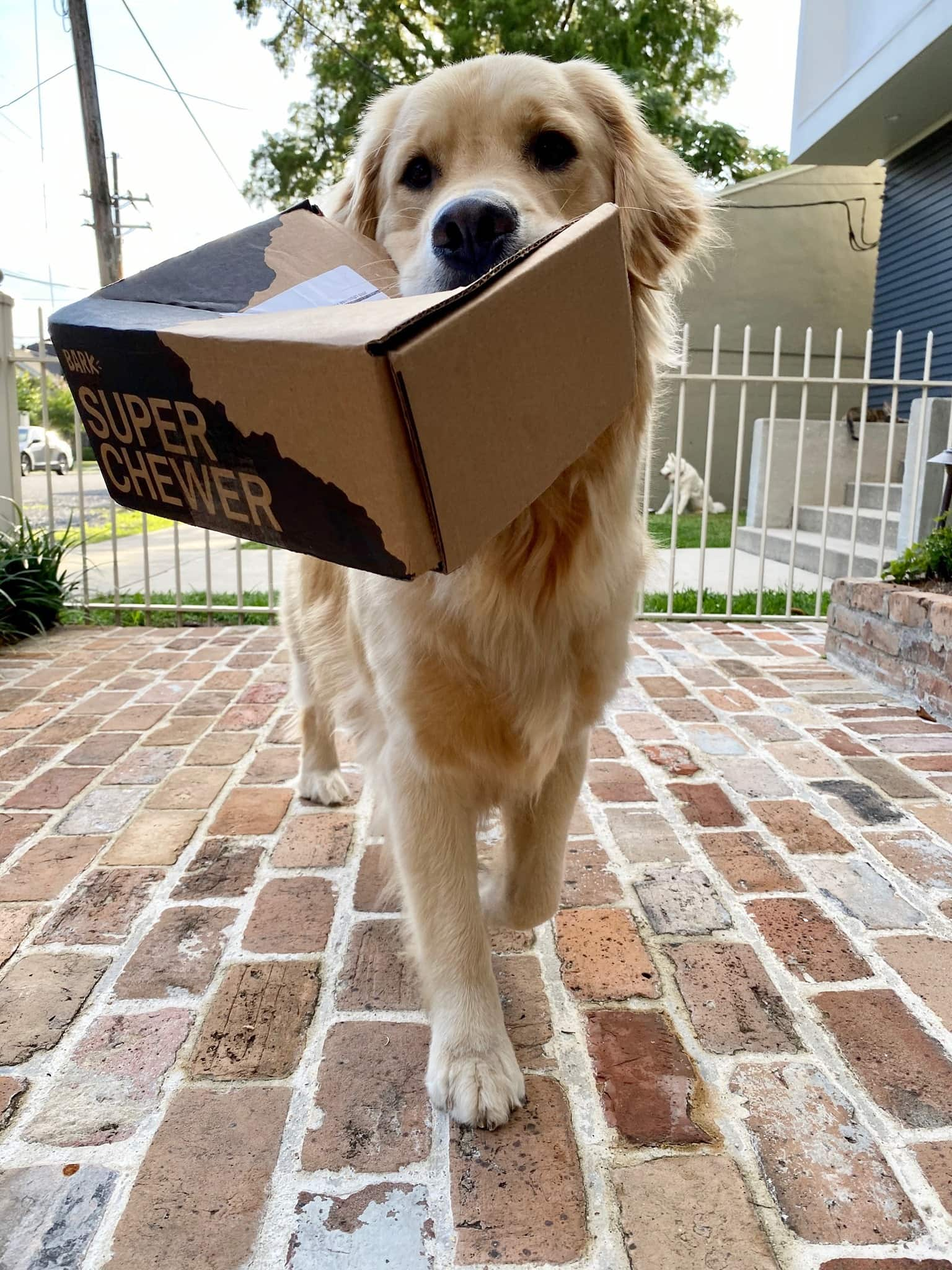 dog with box