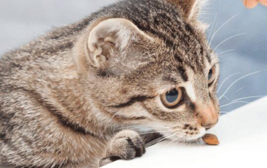 Temptations Cat Treats Stock Up Sale