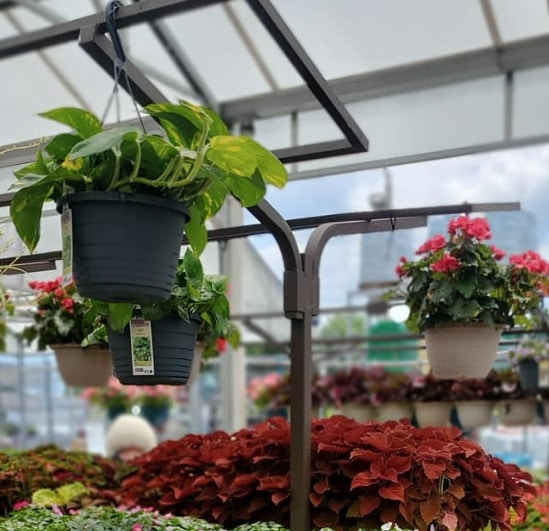 Lowes Spring Black Friday Hanging Plants on Sale
