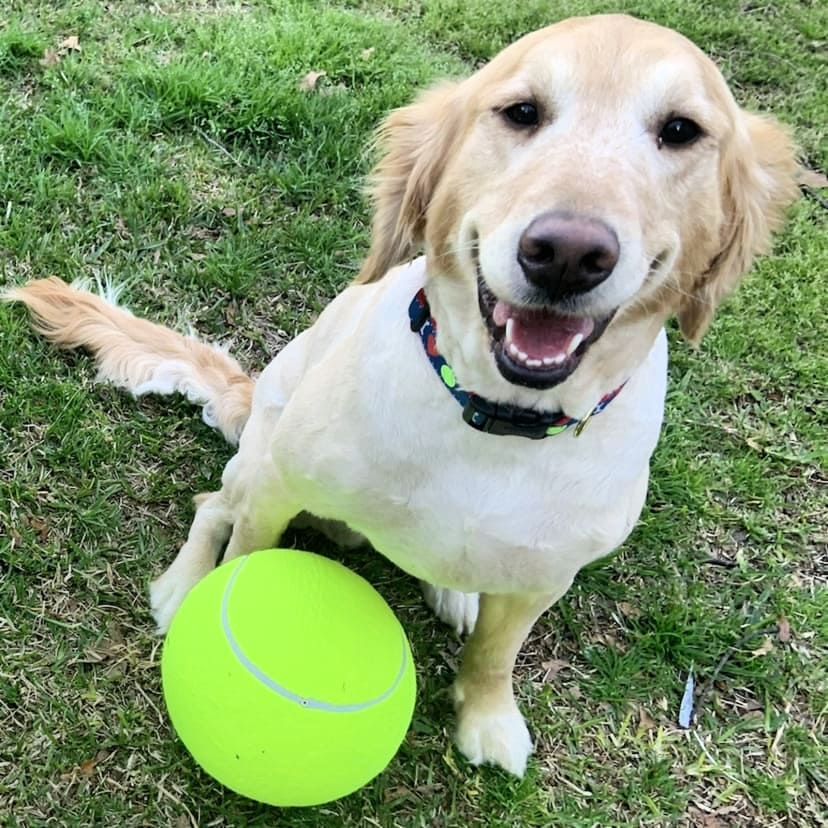 dog toy sale jumbo tennis ball