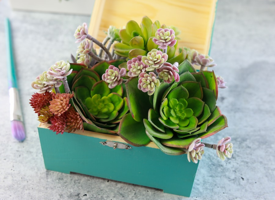 how to make chalk paint close view of finished succulent box