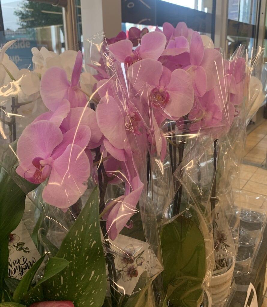Aldi Flowers Orchids