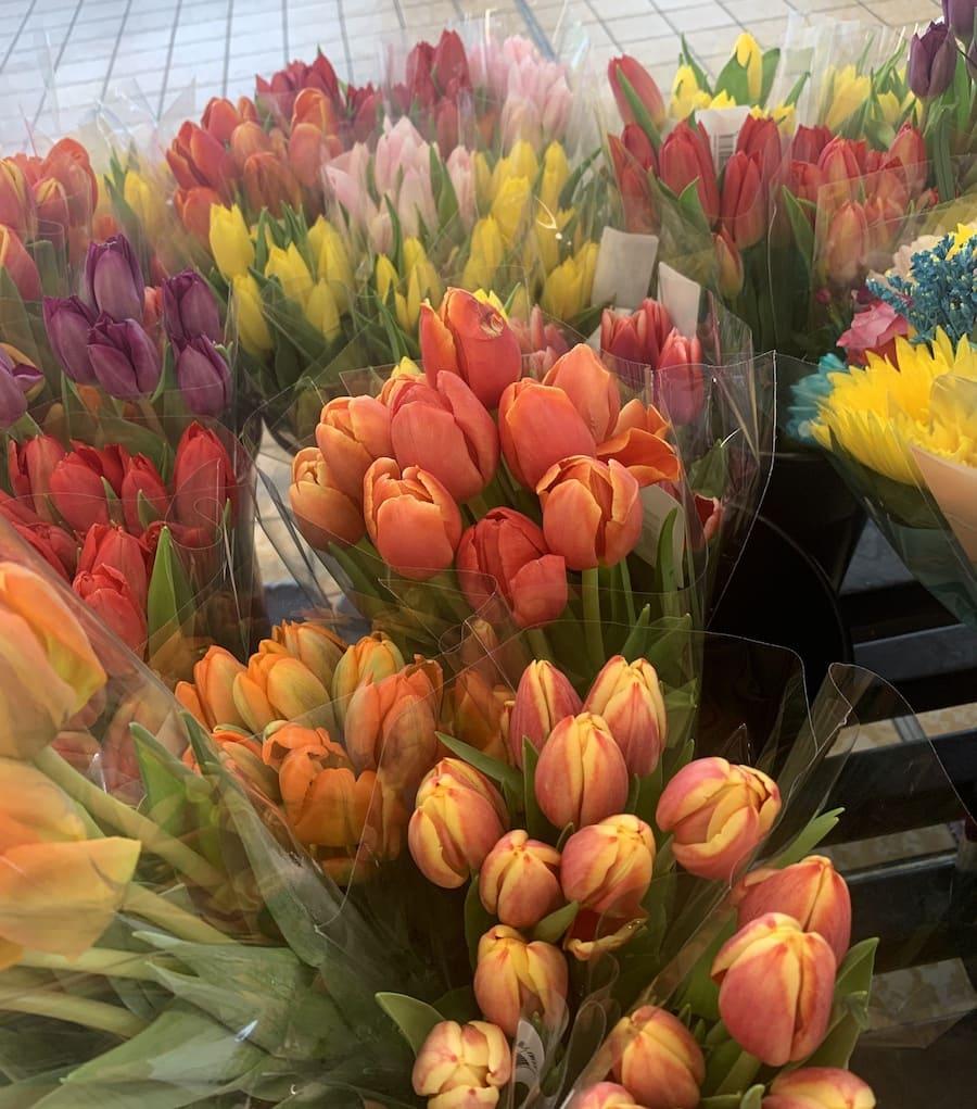 Tulips at Aldi