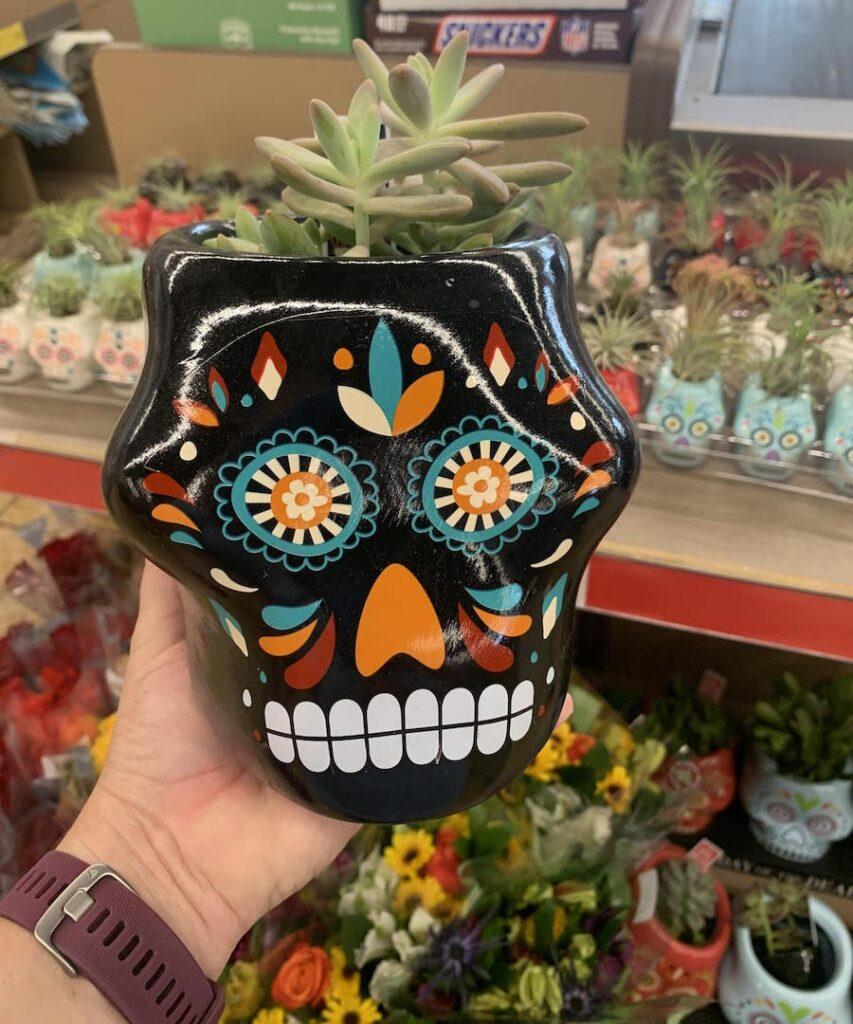Sugar Skull Succulents