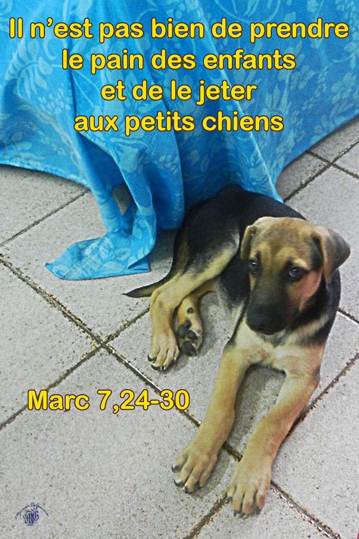 """Résultat de recherche d'images pour """"Marc 7,24-30"""""""