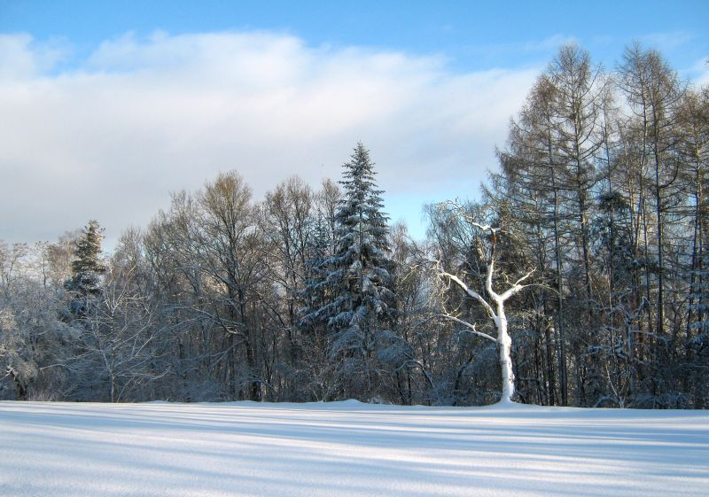 Winterlandschaft am Miesberg
