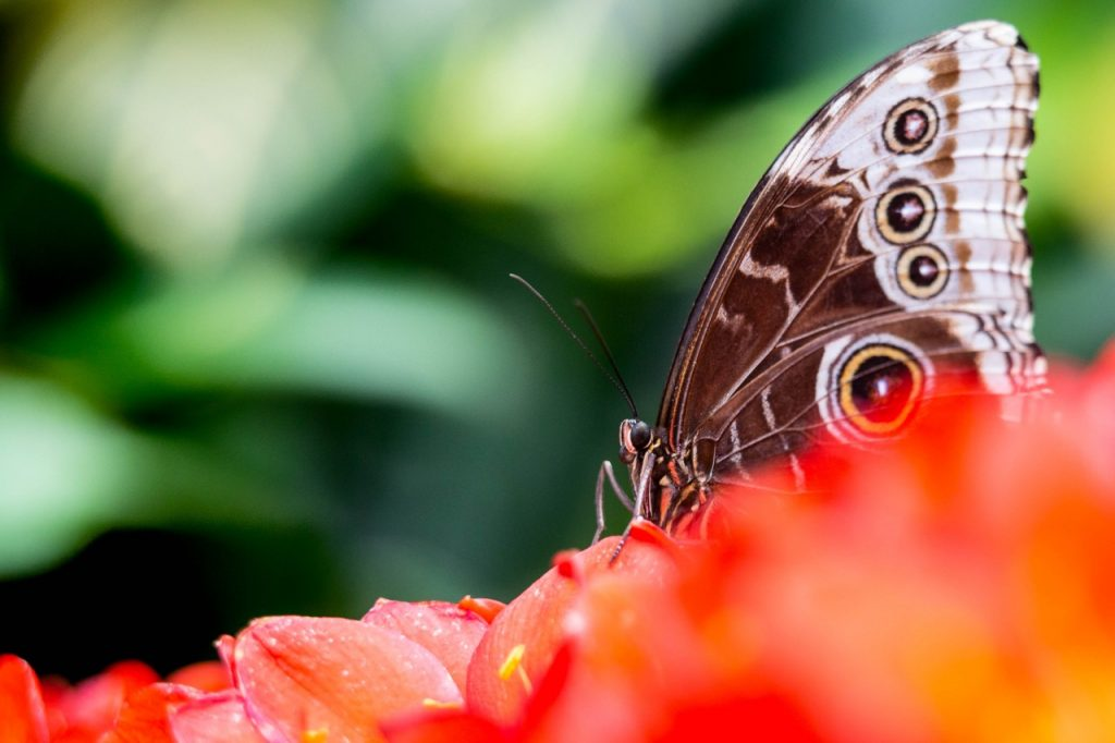 Papillons-en-liberte-a-montreal-jardin-botanique