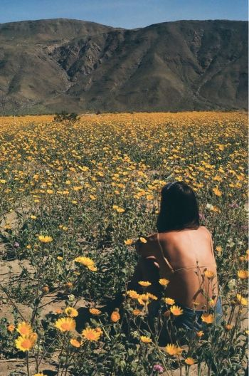 woman sitting in field of yellow flowers