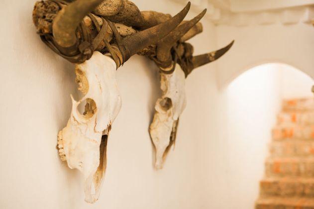 skulls on wall in villa de leyva colombia