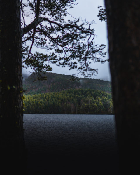 loch with trees