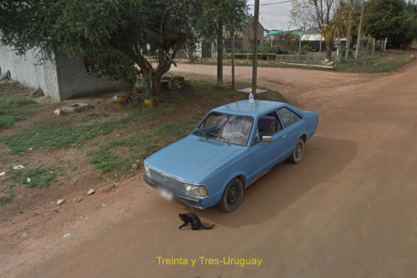 black cat and blue car on rural road