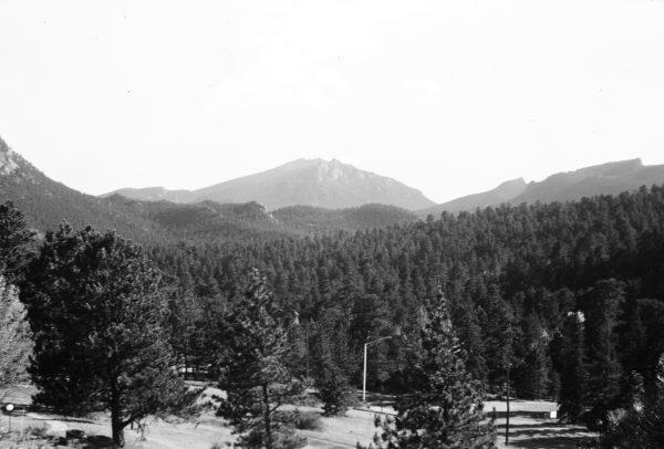 dense pines leading to mountain