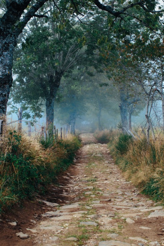 Untitled (Camino path)