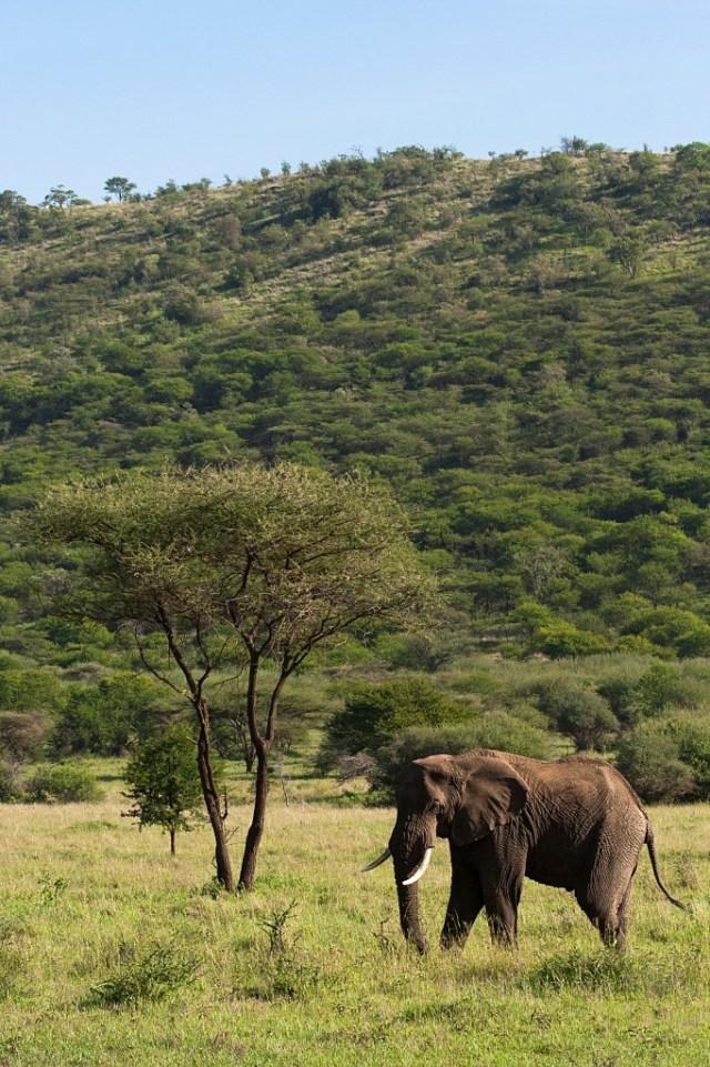 Serengeti-Tanzania-Henning-Petterson