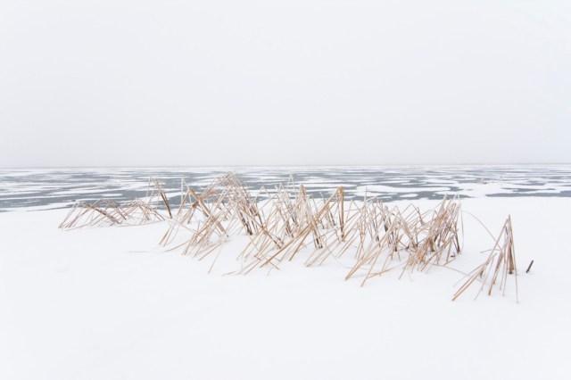 12-Paul-Johnson-Passion-Passport-Photo-Essay-Devils-Lake-North-Dakota-Cattails