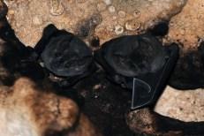 bats-cave