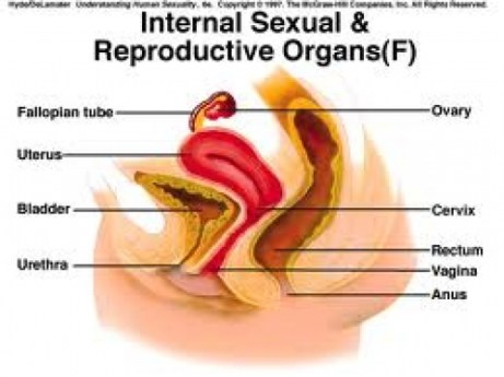 Classwork Series and Exercises {Biology- SS1}: Human Reproductive ...
