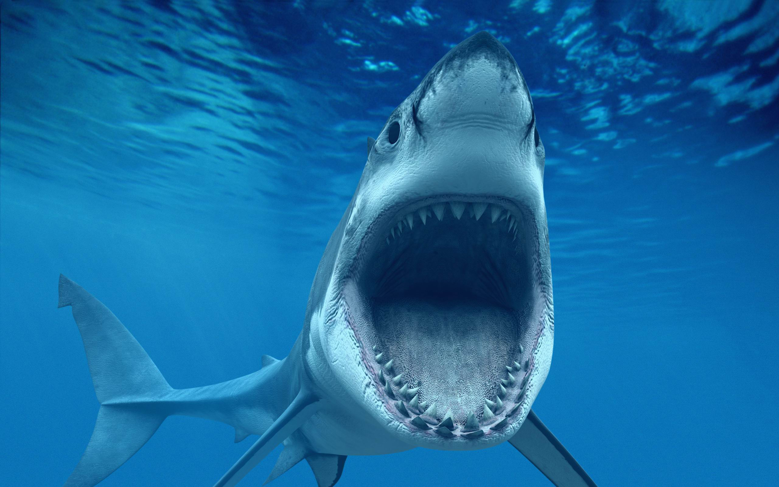 What are the Differences Between Male and Female Sharks ...