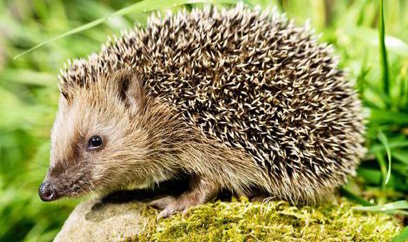 Make Your Own Hedgehog Food