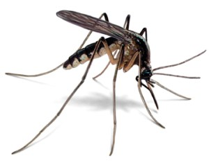 Teens! Protect yourselves from Mosquito Bites and Malaria