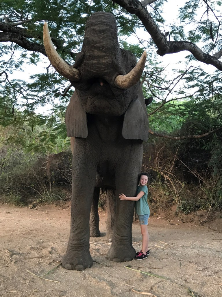 Elephant interaction in South Africa