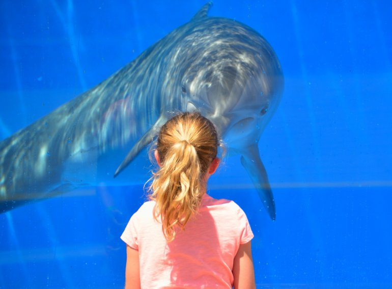 We need to talk about animal tourism! - Performing Dolphin