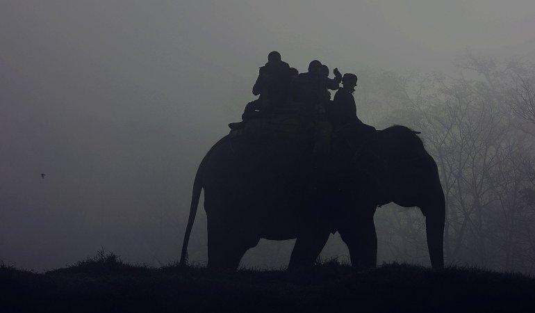 elephant-801968_1920