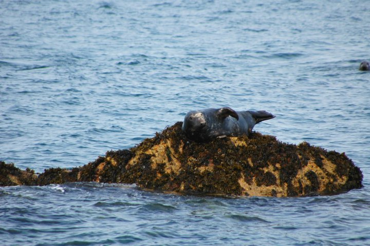 Lundy Island: England's Best Kept Secret?