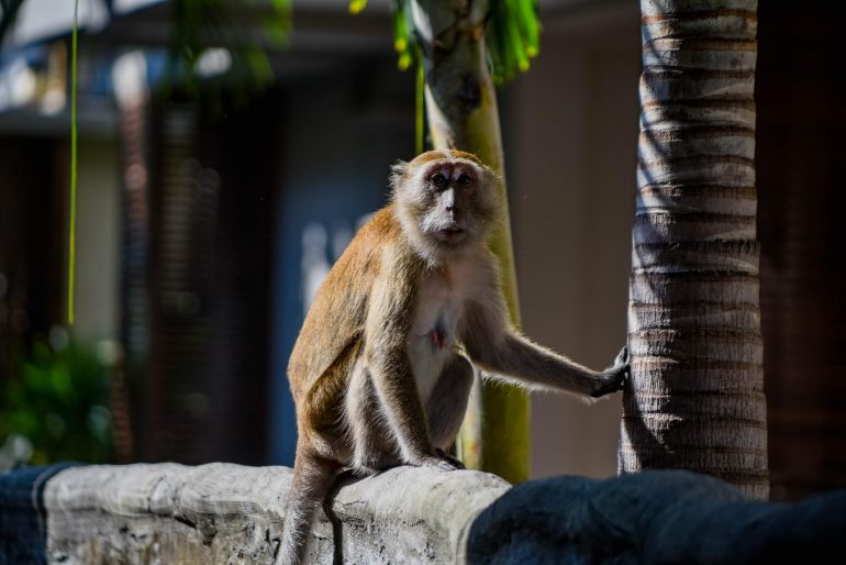 Monkeys on Railay West Beach - Visiting Railay Beach