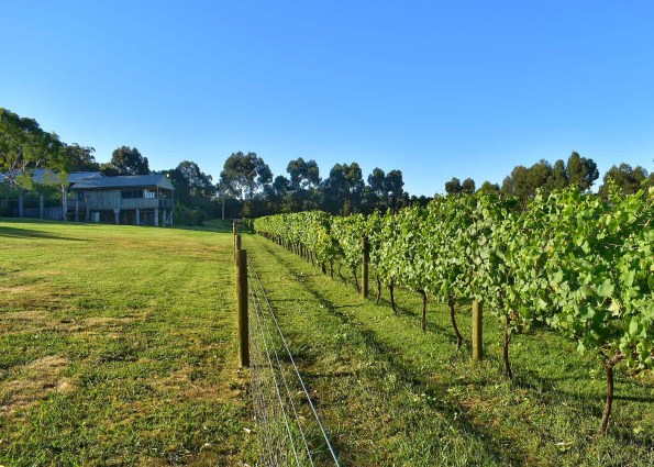 Vineyards at Ten Minutes by Tractor, Red Hill