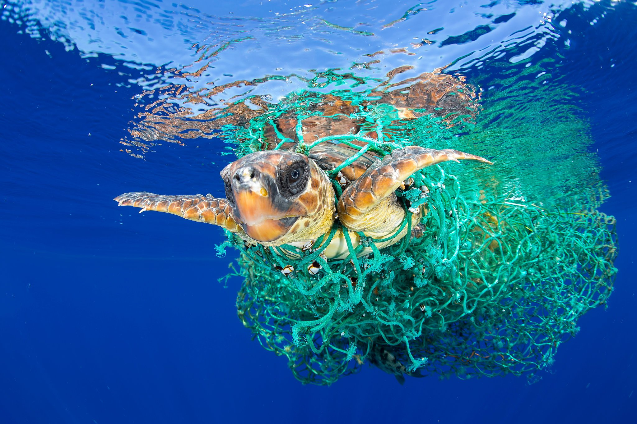 10 Shocking Facts About Plastics In Our Oceans
