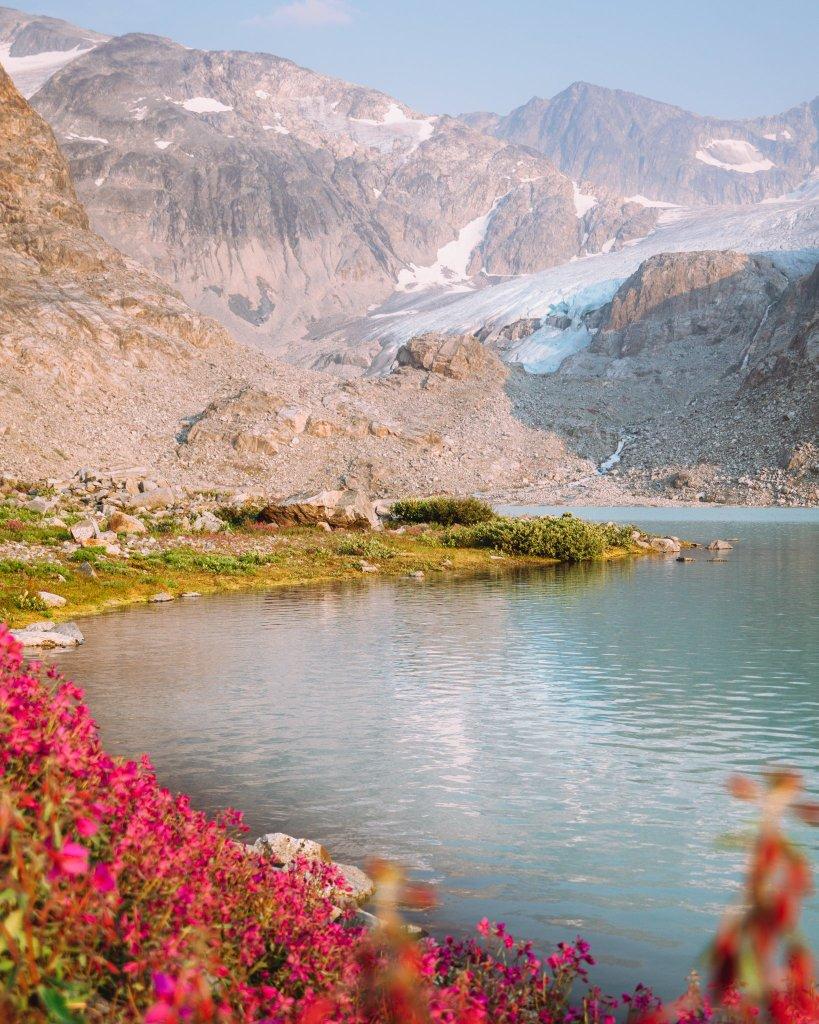 Glacier mountain, blue water and pink wild flowers at wedgemount lake
