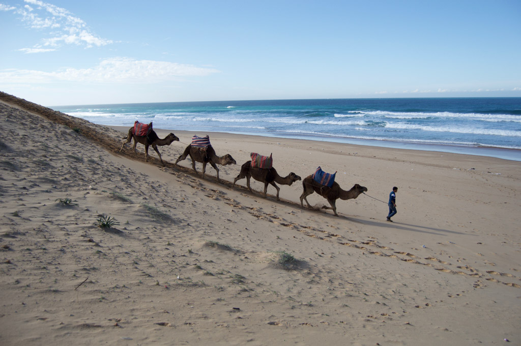 Riding Camels in Tangier Morocco