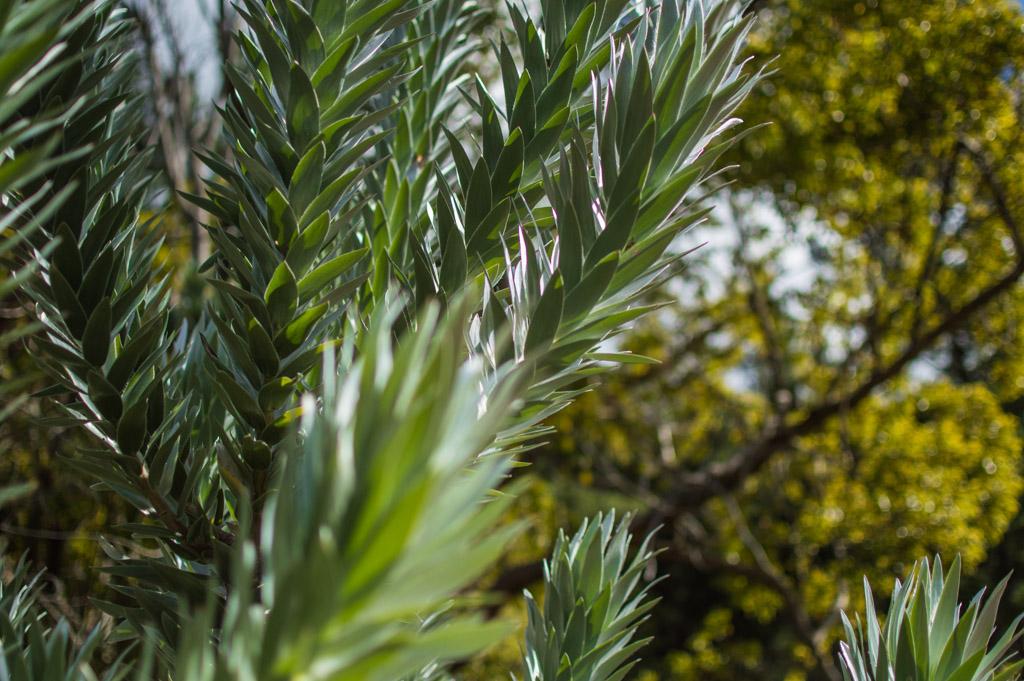 Silver tree feels.