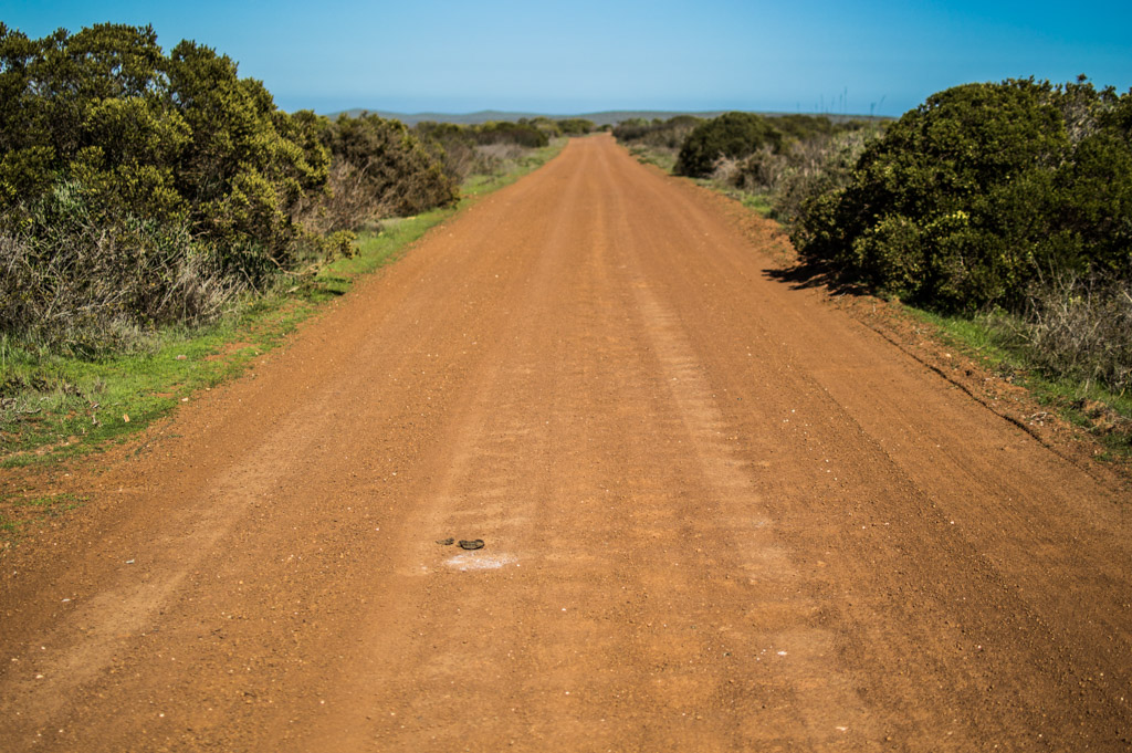 There are both paved and dirt roads in West Coast National Park