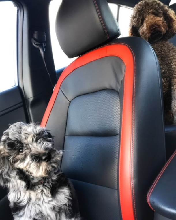 How To Successfully Take Road Trips With Dogs