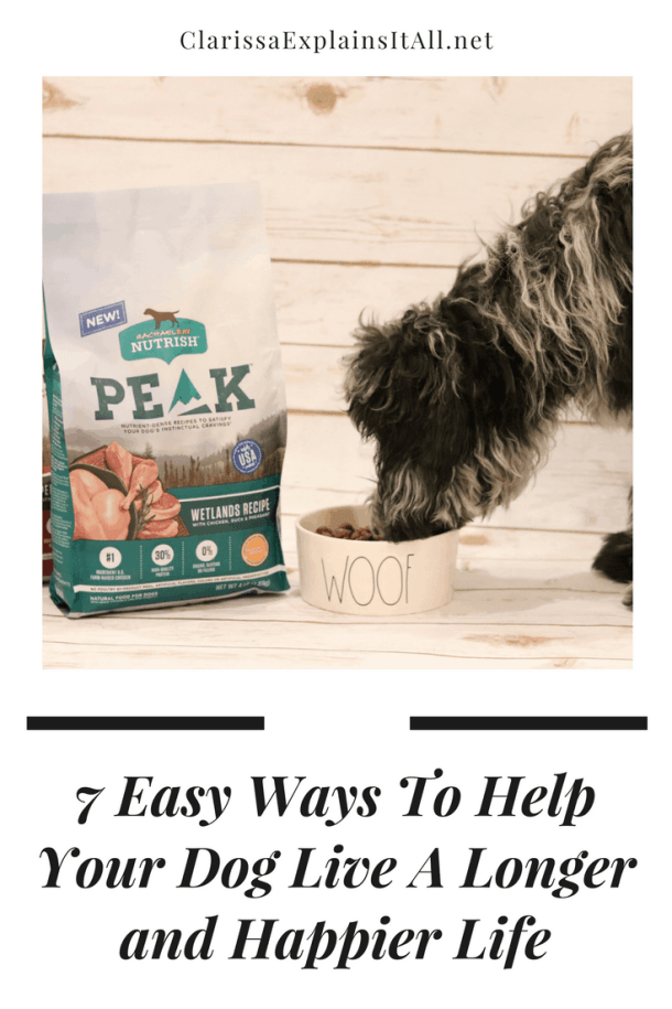7 Easy Ways To Help Your Dog Live A Longer and Happier Life