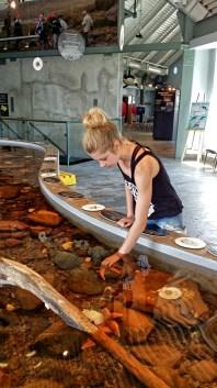 St Andrews Aquarium Touch Tank