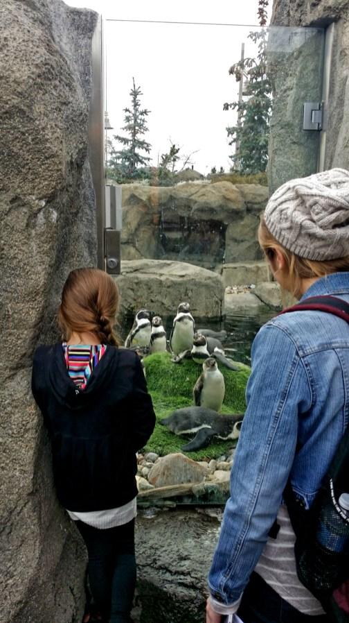 Penguin Plunge, Calgary Zoo