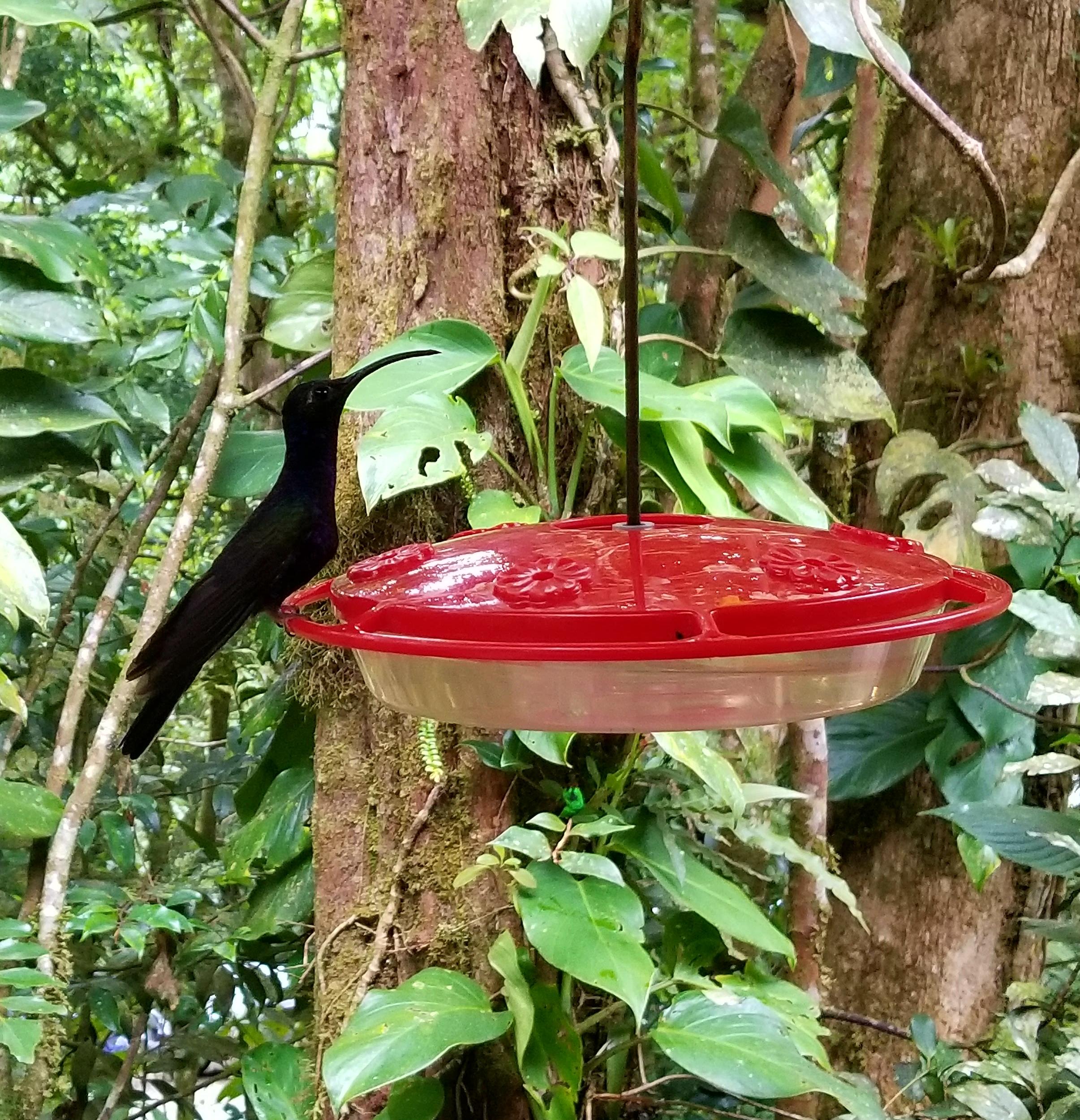 Humming bird Gallery, Monteverde, Costa Rica