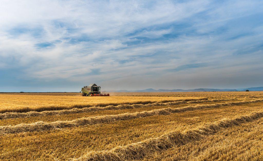 Canva- Wheat Field