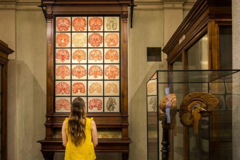 Paola Bertoni al Museo di Anatomia Umana Luigi Rolando dell'Università di Torino, foto Virginia Barinaga Ʌir Fotografía in stage presso Plastikwombat