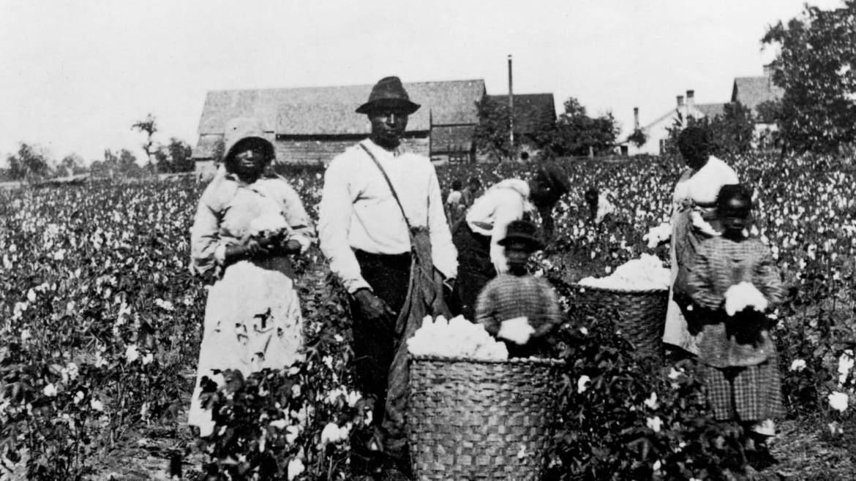 Schiavi nelle piantagioni di cotone