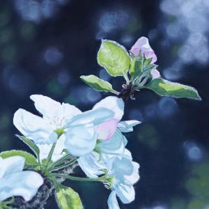 pastel painting of an apple blossom in the light