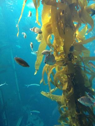 Monterey Bay Aquarium 2