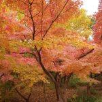 京都2013 その2