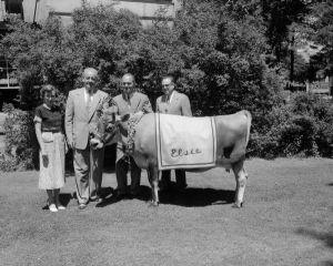 15.06.2020 – L'heure de rentrer les vaches dans la tour Capitol