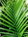 palm brs