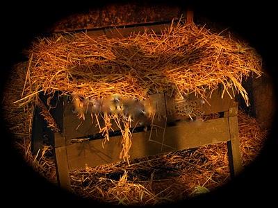 christmas-backgrounds-manger-2