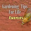 gardening tips for life enemies